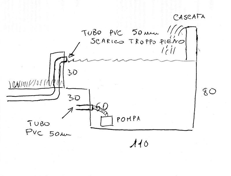Leggi argomento laghetto in cemento for Costruire uno stagno